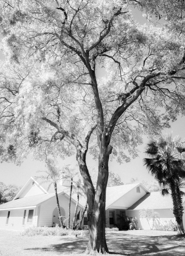 Tree with an infrared style